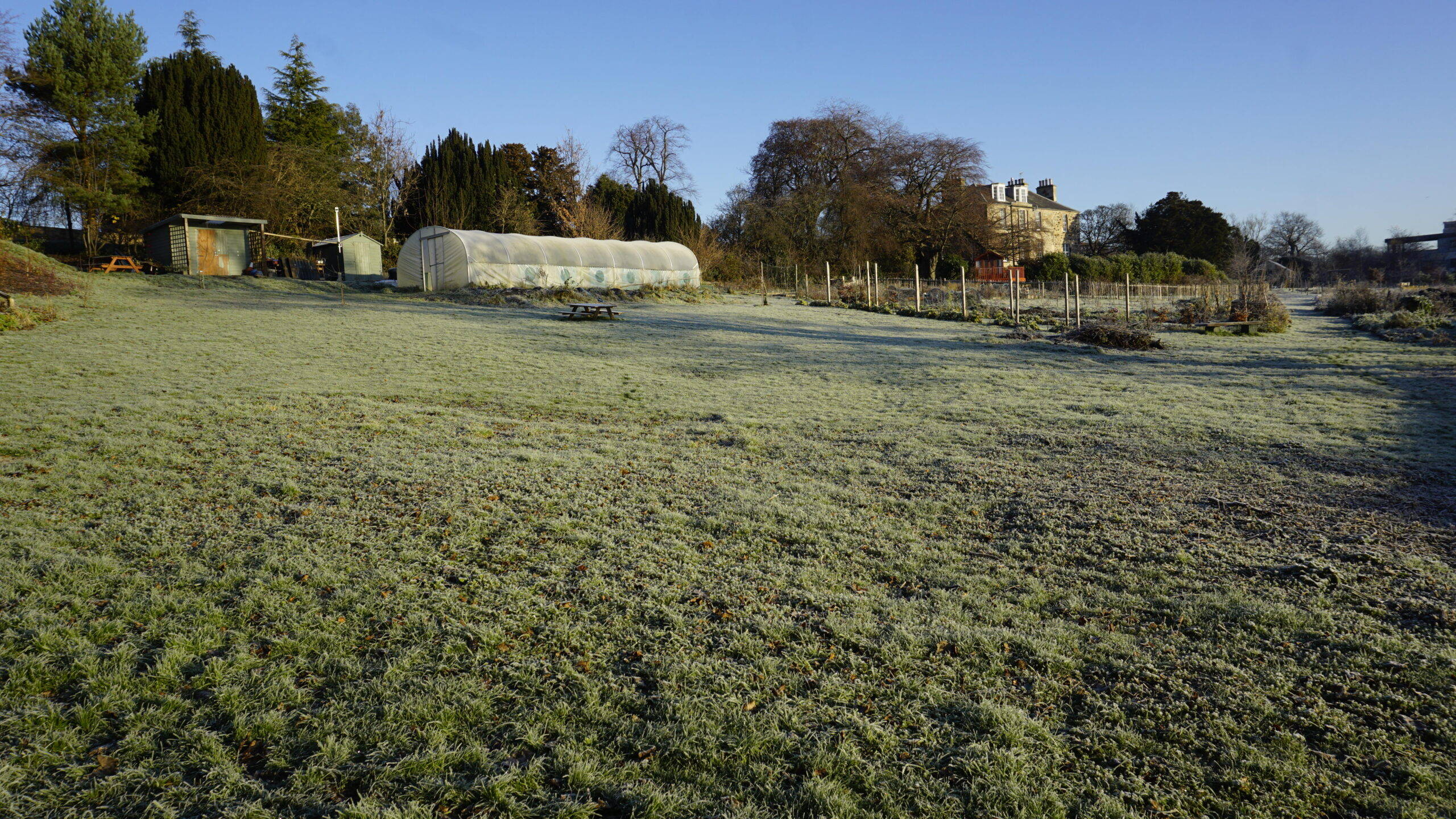 The polytunnel and the Manse