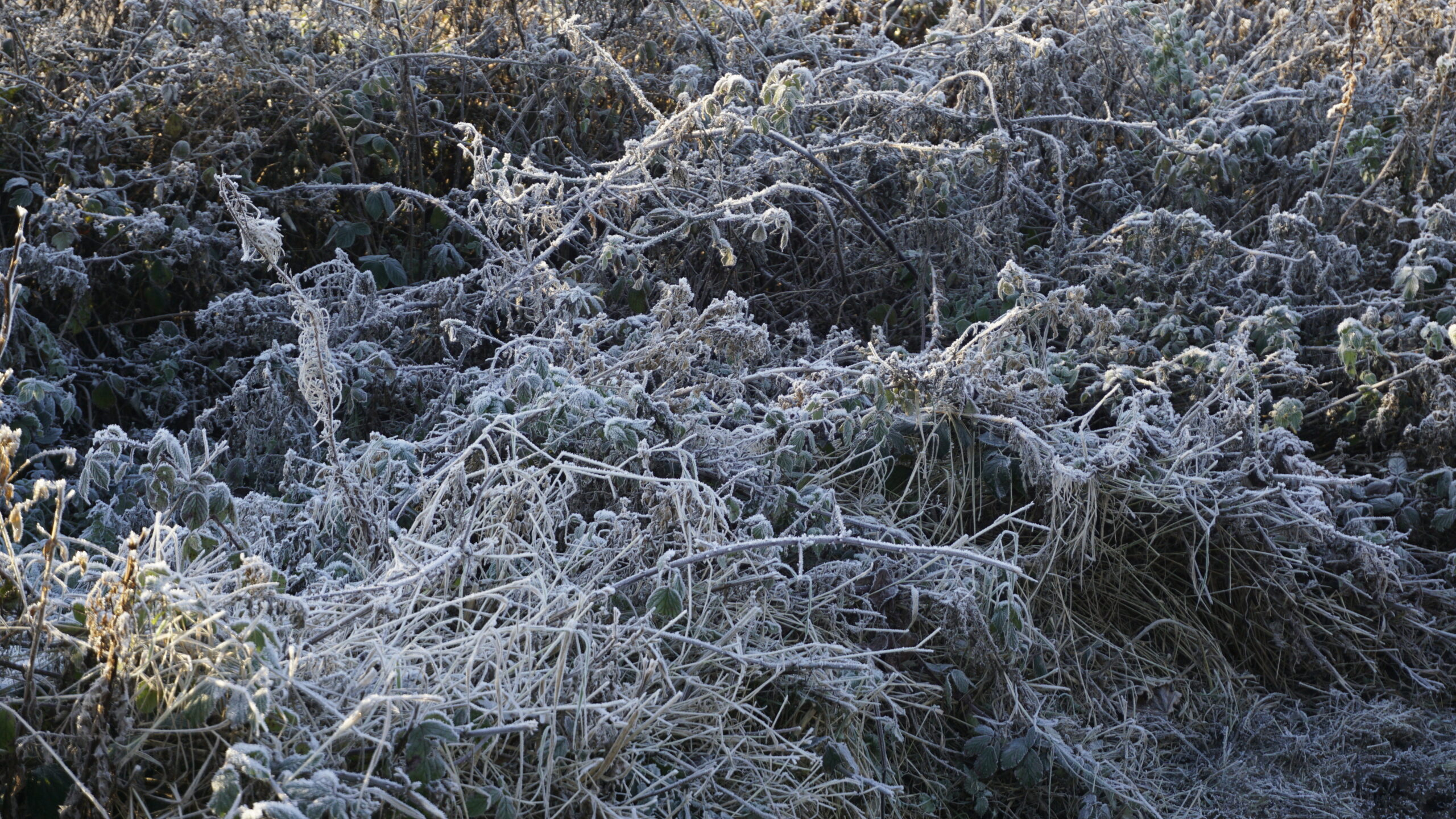 A carpet of frost