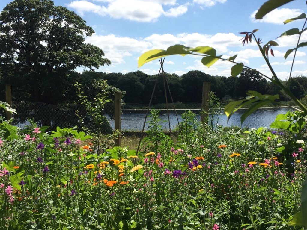 The edible flower bed